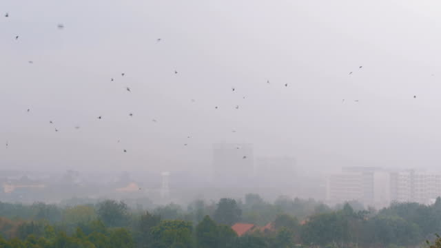 Tropical Rain in the Jungle. Swallows and Birds Fly in the Rain video