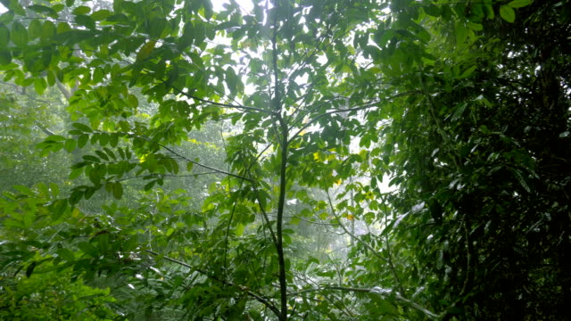 tropical rain in the jungle - monsone video stock e b–roll