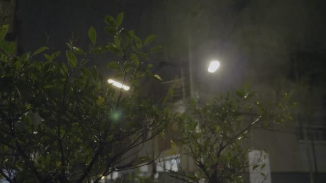 Tropical Rain Pours at Night video