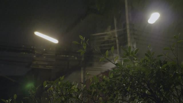 vídeos de stock, filmes e b-roll de chuva tropical cai à noite - relevo