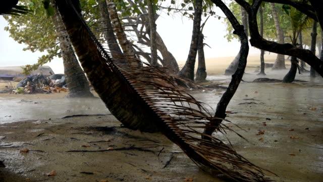 Tropical rain video