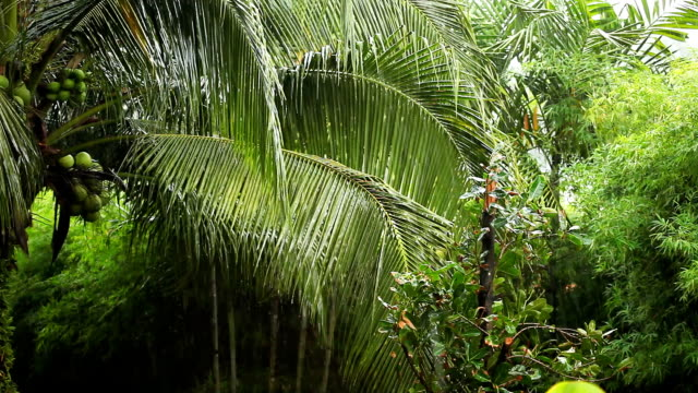 Tropical rain video