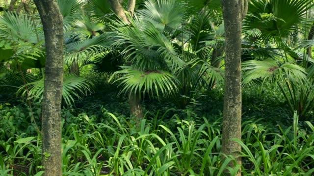 tropical rain-forest; steadicam pan - cespuglio tropicale video stock e b–roll
