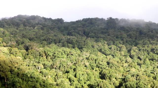 tropischer regenwald - kiefernwäldchen stock-videos und b-roll-filmmaterial