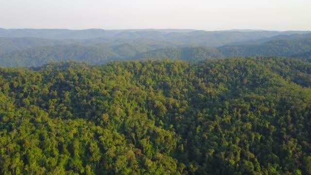 熱帯雨林 - インドネシア点の映像素材/bロール