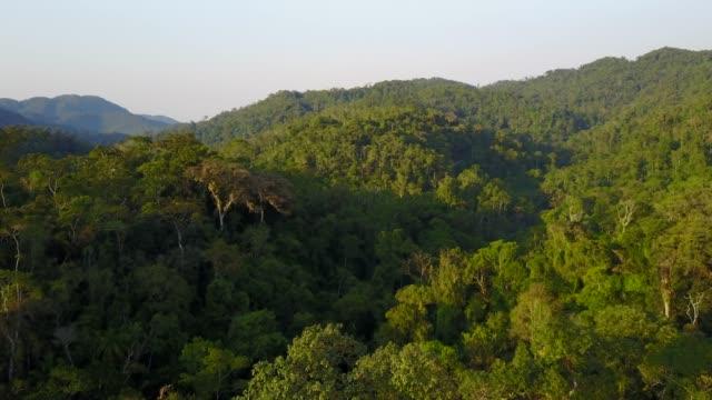 vidéos et rushes de forêt tropicale humide - forêt tropicale humide