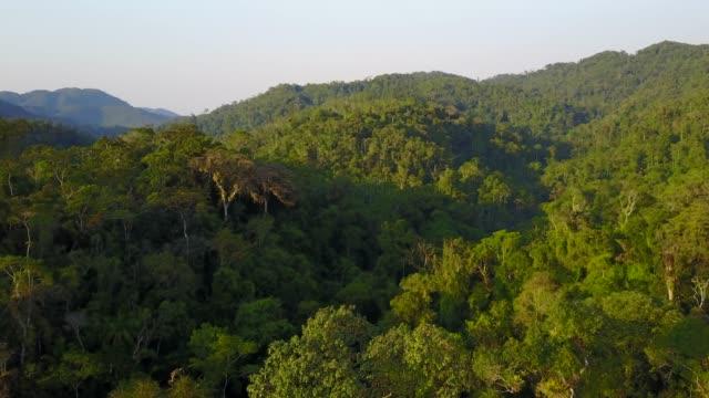 stockvideo's en b-roll-footage met tropisch regenwoud - maleisië
