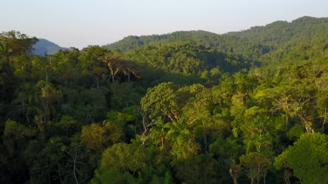 Tropical Rainforest video