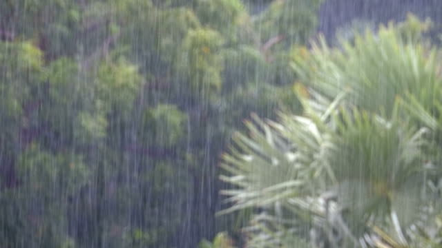 Tropical Rainstorm in the Jungle against the backdrop of a Green Forest with a Palm Tree video