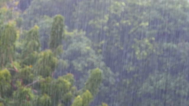 Tropical Rainstorm in the Jungle against the backdrop of a Green Forest with a Palm Tree Tropical rainstorm in the jungle against the backdrop of a green forest with a palm tree. Tropical wind and rain drops falling on the green palm tree leaves. Tropical Monsoon. Bad Weather indian ocean stock videos & royalty-free footage