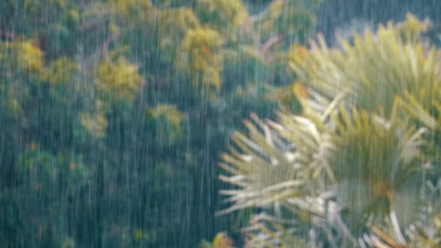 tropical rainstorm in the jungle against the backdrop of a green forest with a palm tree - monsone video stock e b–roll