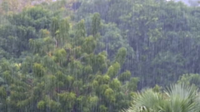 Tropical Rainstorm in the Jungle against the backdrop of a Green Forest with a Palm Tree. Slow Motion video