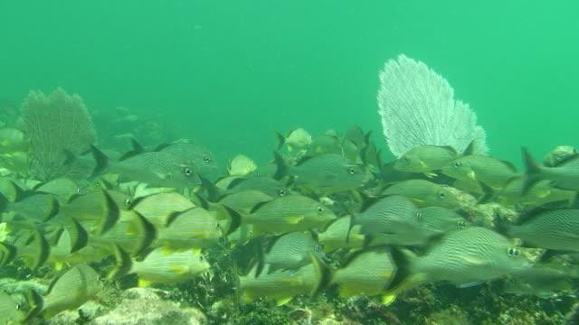 Tropical Reef Fish video