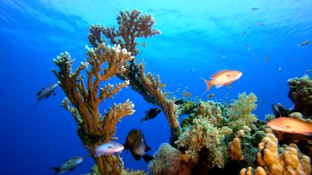 vídeos de stock, filmes e b-roll de vida subaquática de recifes tropicais - equipamento de esporte aquático
