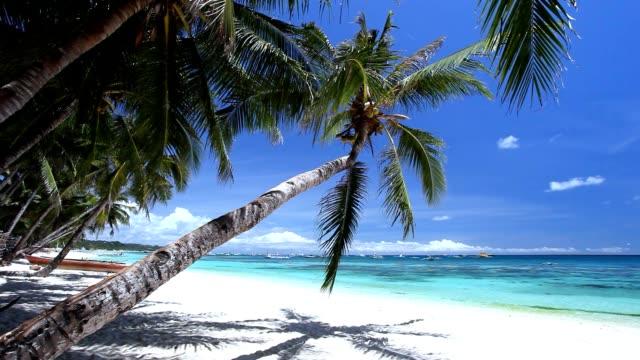 vidéos et rushes de rivage sablonneux tropical avec cocotier sur l'île de boracay. côte sauvage et inhabitée - perfection