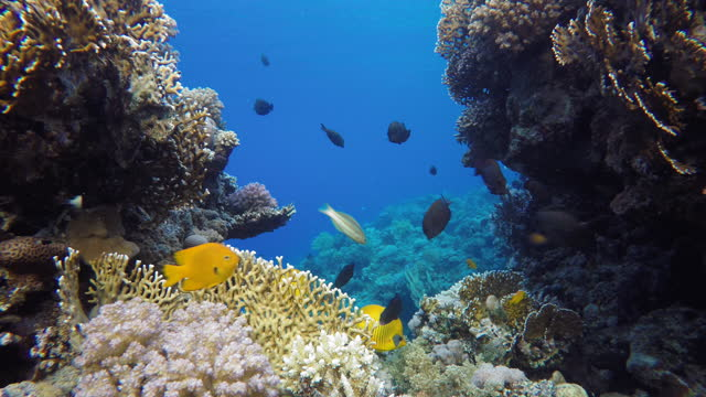 Tropical sea and coral reef.  Coral reef. video