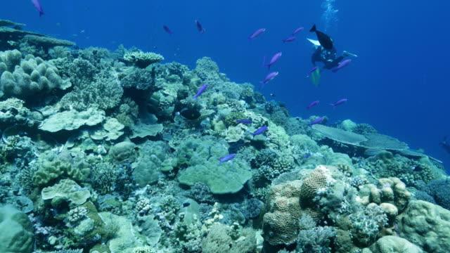 vídeos y material grabado en eventos de stock de arrecife de coral del mar tropical - micronesia