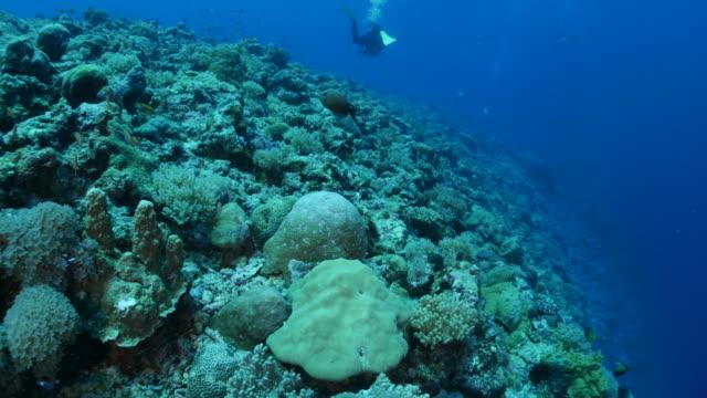 vídeos y material grabado en eventos de stock de mar tropical, arrecife de coral - zona pelágica