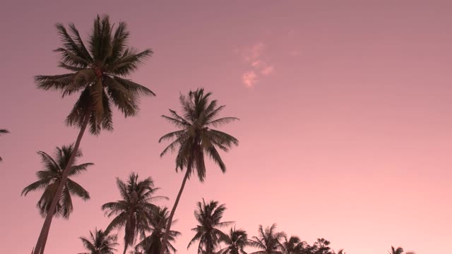 tropical seaside coconut palm tree in wind sunset evening. travel summer beach holiday vacation concept. - palm of hand stock videos & royalty-free footage
