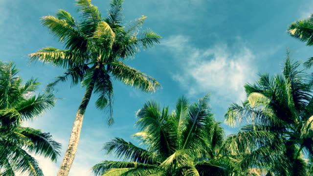 vídeos y material grabado en eventos de stock de árbol tropical de cielo y de la palma, memoria del color de la vendimia - micronesia