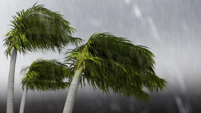 sztorm tropikalny - palm tree filmów i materiałów b-roll