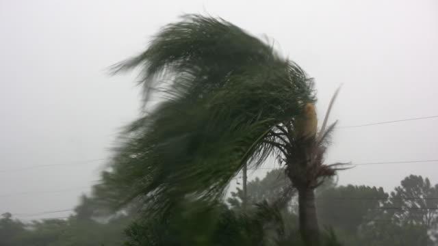 Tropical Storm video