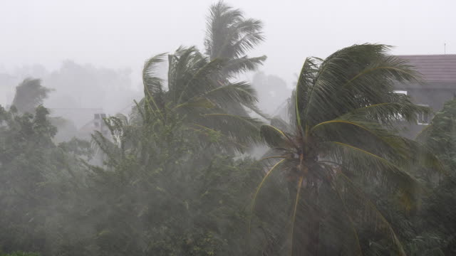 tropical storm with torrential rain and high winds blowing the coconut palm trees - pioggia torrenziale video stock e b–roll