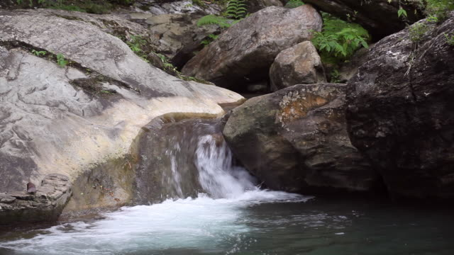 HD tropical stream video