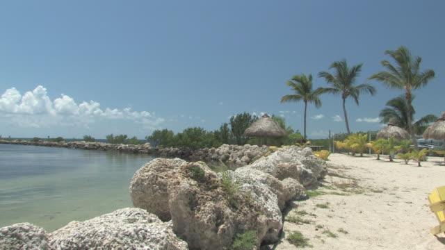 tropische sonnigen strand-hd-bis 30 - tropischer baum stock-videos und b-roll-filmmaterial