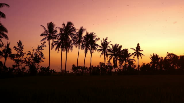 tropischer sonnenuntergang hinter kokospalmen mit dem führen der vögel - palme stock-videos und b-roll-filmmaterial