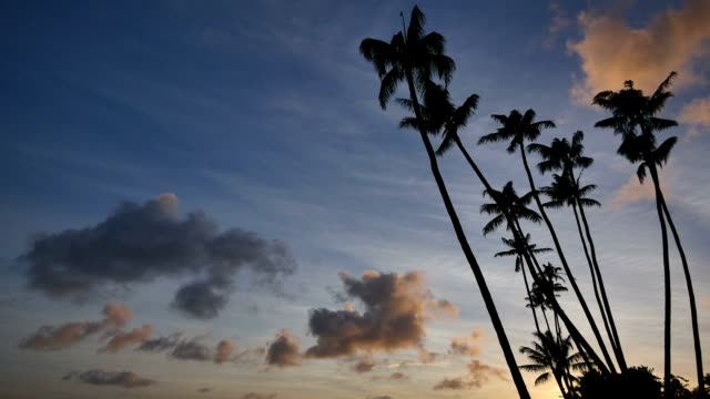 Tropical Sunset: Hawaii Tropical sunset (series of footage from vacation related concepts) coconut palm tree stock videos & royalty-free footage