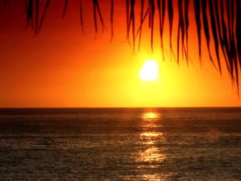 vidéos et rushes de ntsc : coucher de soleil tropical - angiosperme