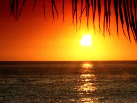 vidéos et rushes de pal : coucher de soleil tropical - angiosperme