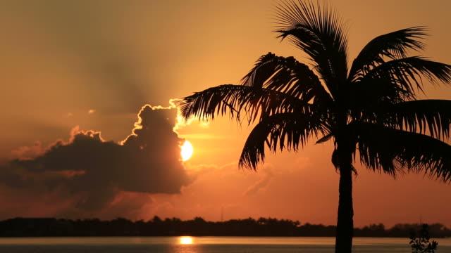 tropikalny zachód słońca - palm tree filmów i materiałów b-roll