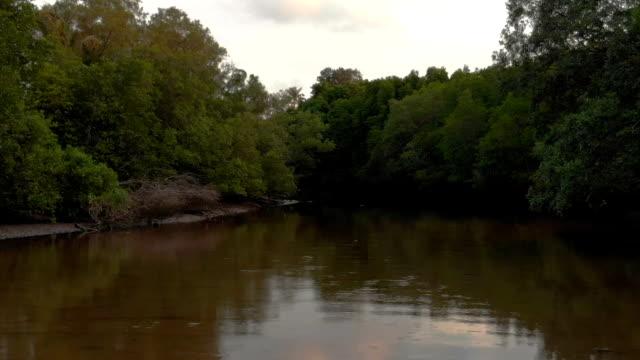 tropical swamp with sky reflection - побережье мексиканского залива сша стоковые видео и кадры b-roll