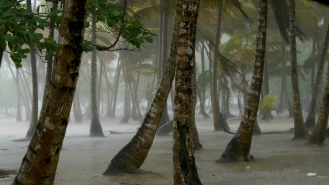 Tropical thunderstorm video