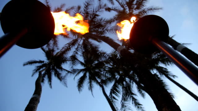 Tropical tiki torches and palm trees at dusk video