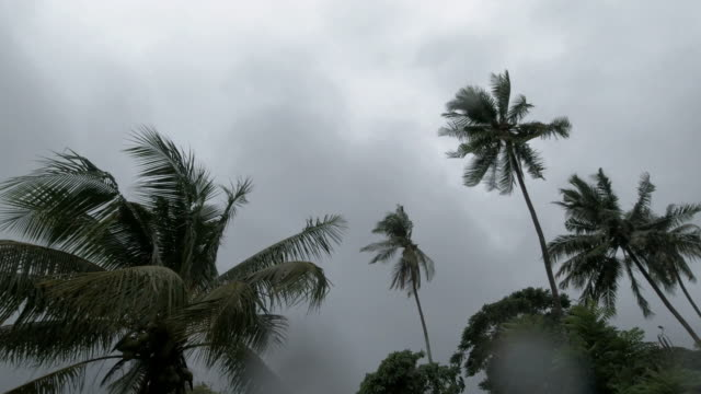 tropical tree tops bending in extreme weather gale force monsoon winds - monsone video stock e b–roll