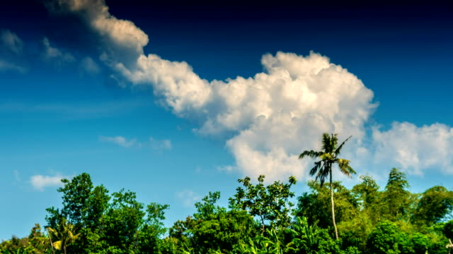 Tropical trees and clouds time lapse video
