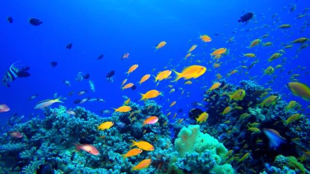熱帯水中リーフ海魚 - 魚点の映像素材/bロール