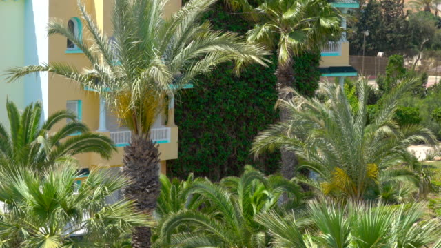 tropical vacation. beautiful tropical landscape with palm trees on blue sky background in resort - giardino botanico video stock e b–roll