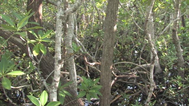 tropische vegetation-hd-bis 30 - baumgruppe stock-videos und b-roll-filmmaterial