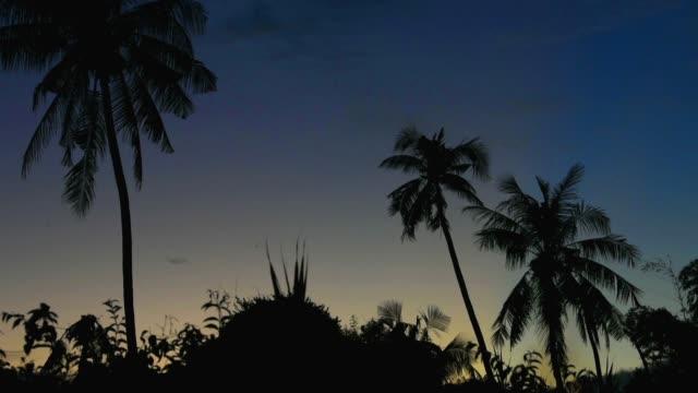tropical view landscape with palm tree againtst sunrise. video