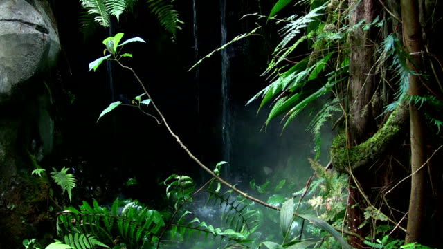 Tropical Waterfall video