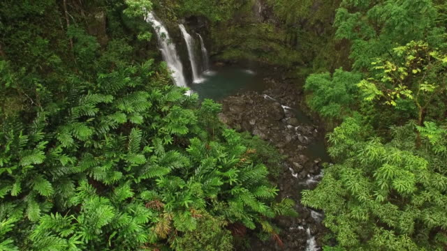 Tropical Waterfalls Tropical Forest - Drone, Waterfalls drenched stock videos & royalty-free footage