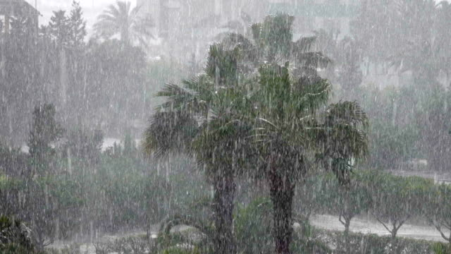 tropical wind and rain drops falling on the green palm tree leaves . hurricane rains . cyclone. tropical rainstorm in the jungle against the backdrop of palm tree. - pioggia torrenziale video stock e b–roll