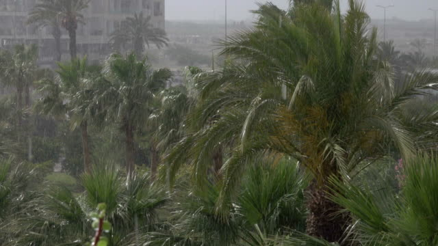tropical wind and rain drops falling on the green palm tree leaves . hurricane rains . cyclone. tropical rainstorm in the jungle against the backdrop of palm tree. - liberia video stock e b–roll