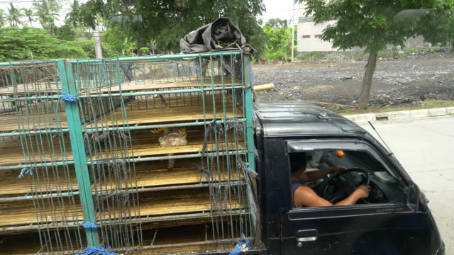 MS Truck Transporting Chickens video