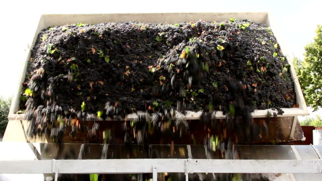 Truck unloading grapes into one of the lined crushers video