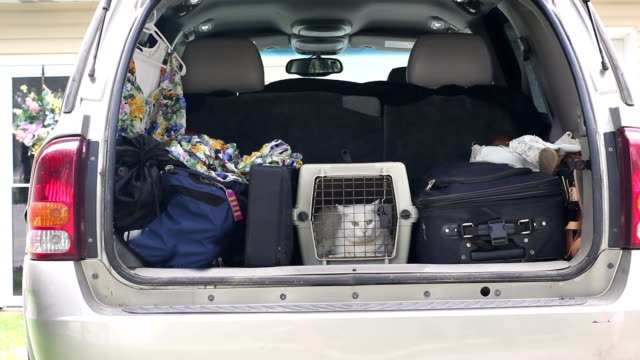 Trunk of Tan SUV crammed with luggage and cat for long trip video
